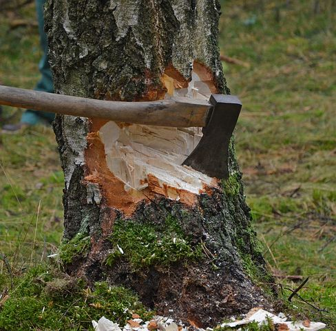 axe cutting tree